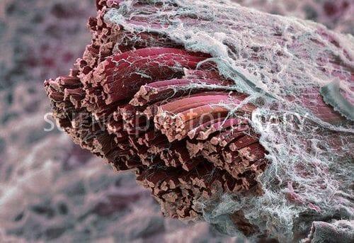 Entraînez-vous selon votre type de fibres musculaires