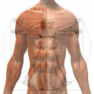 Analyser la composition corporelle: bien mesurer le pourcentage de gras ( 7 cr. FKQ)