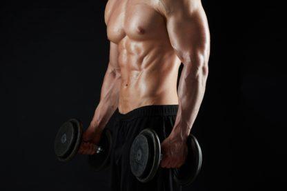 gain de masse, hypertrophie, muscle