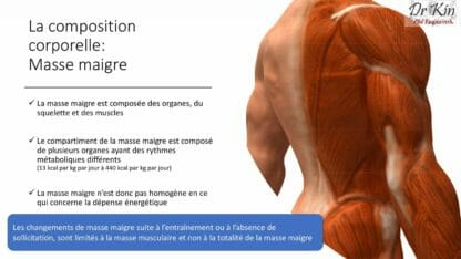 Métabolisme de repos, composition corporelle